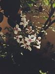 flower, chennai