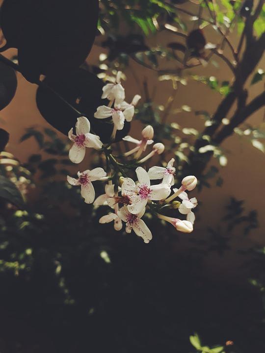 Flower chennai india free photo on pixabay flower chennai india color plant street green mightylinksfo
