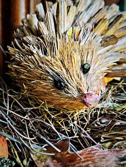 Hedgehog, Straw Hedgehog, Autumn