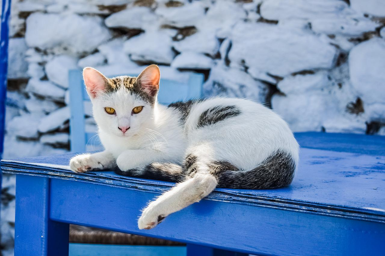 места греческие кошки картинки дружба имеет два