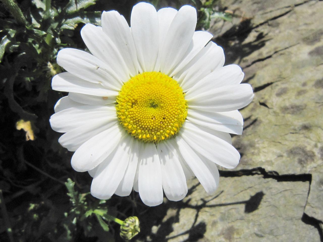 перекармливать, картинка цветов улыбок узнали ней благодаря
