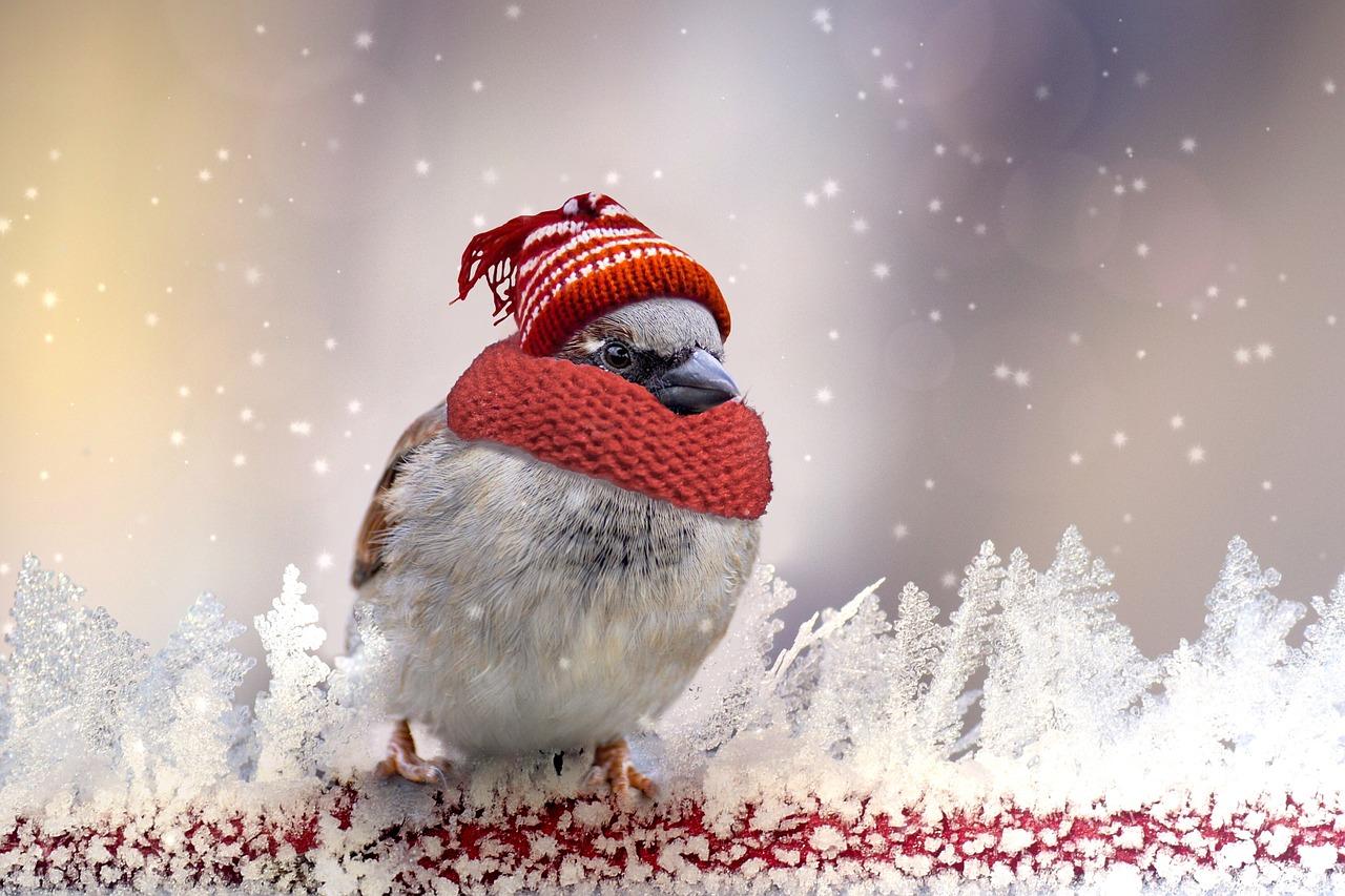 Доброго понедельника картинки красивые зимние
