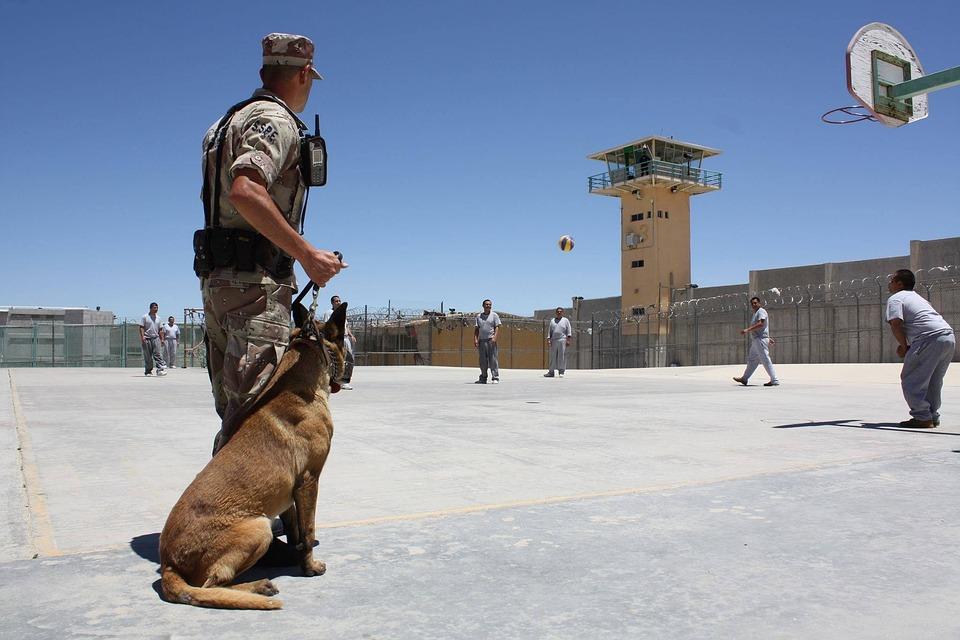 狗, 警察, Ar, 动物, 宠物, 主任, 守卫, 安全, 统一, 培训, 保护, 服务, 犯罪, 法