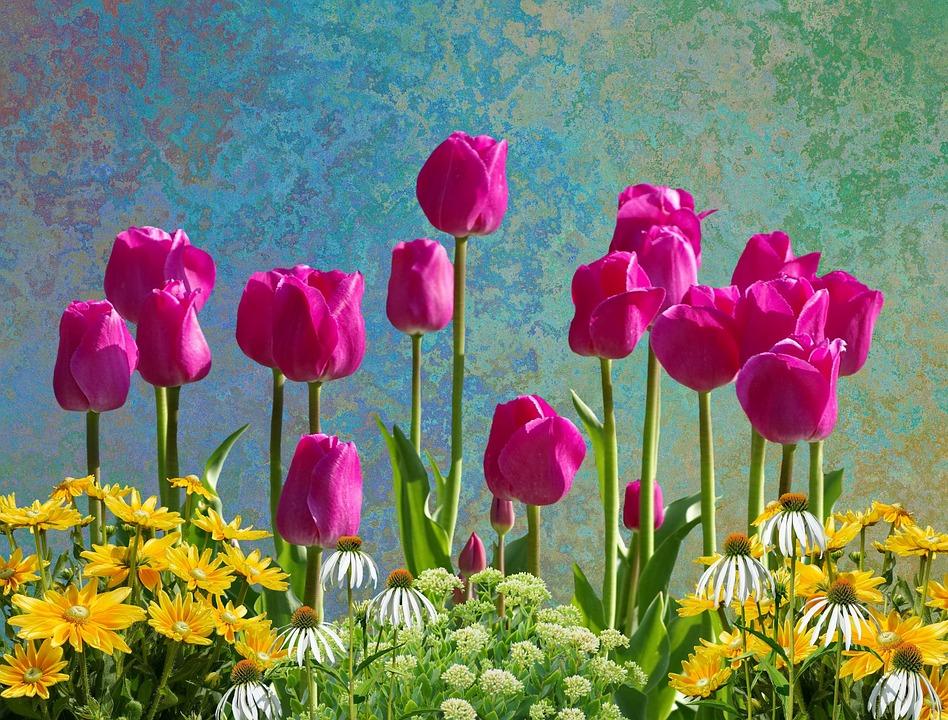 Tulipanes Flores Primavera Foto gratis en Pixabay