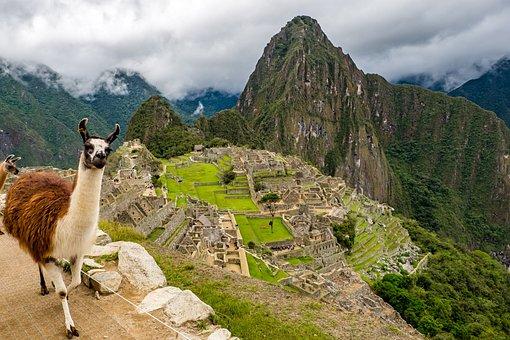 Peru, Machu Picchu, Lama, World Heritage