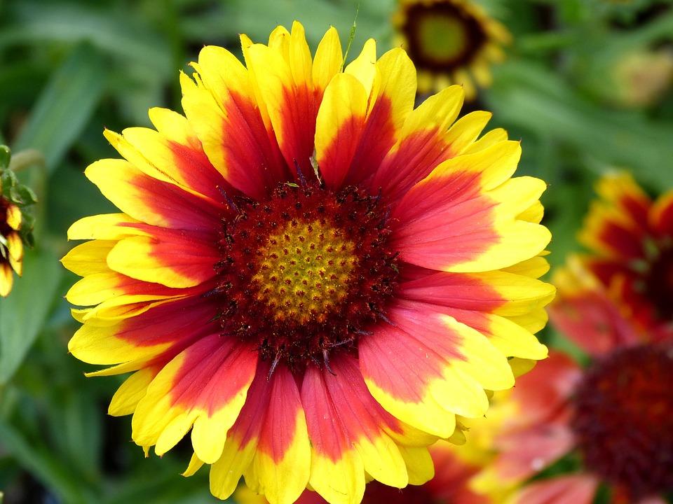 flores la naturaleza flor hermosa foto gratis en pixabay