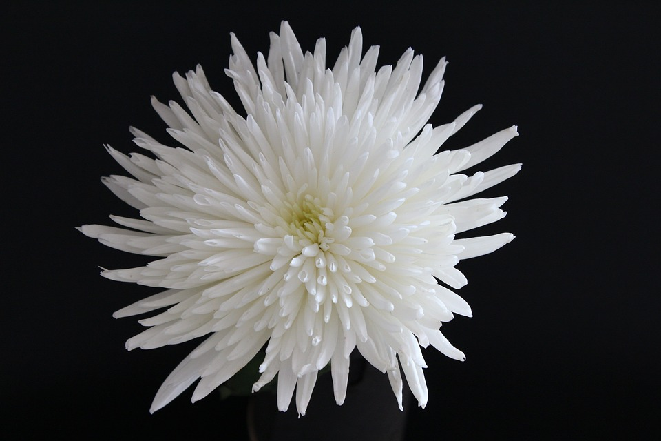 Flower white floral free photo on pixabay flower white floral nature plant blossom mightylinksfo