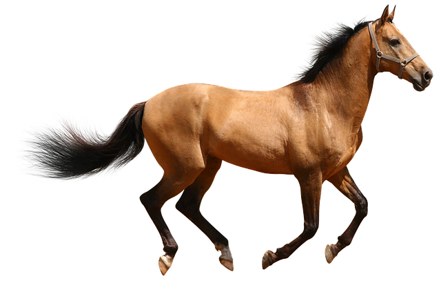horse brown isolated  u00b7 free photo on pixabay