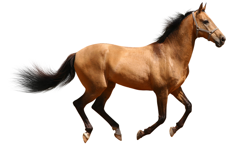 Essay on Horse in English for Class 1, 2, 3, 4 and 5