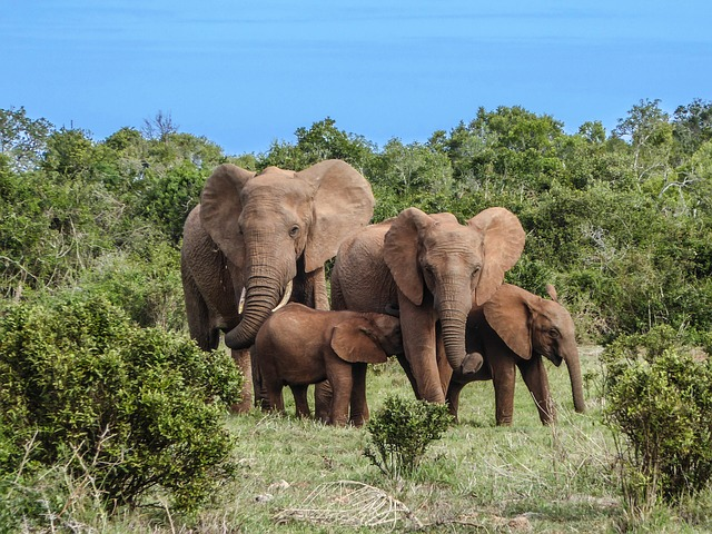 Free Photo Elephant Family Elephant Safari Free Image