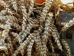thanksgiving, cereals, harvest