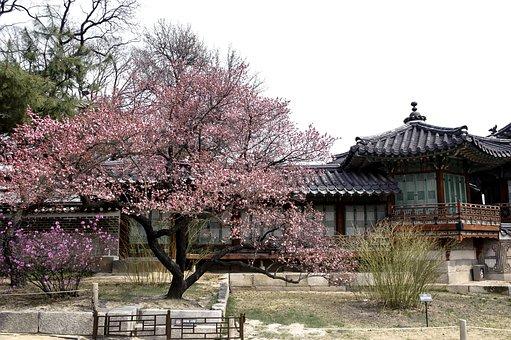 한국, 전통, 고궁, 건축, 문살, 문, 한국 전통, 창덕궁, 꽃, 매화