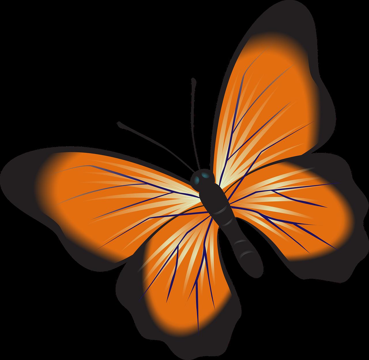 Butterfly Orange Clip Art Free Image On Pixabay
