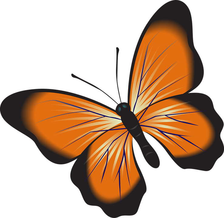 butterfly orange clip art free image on pixabay