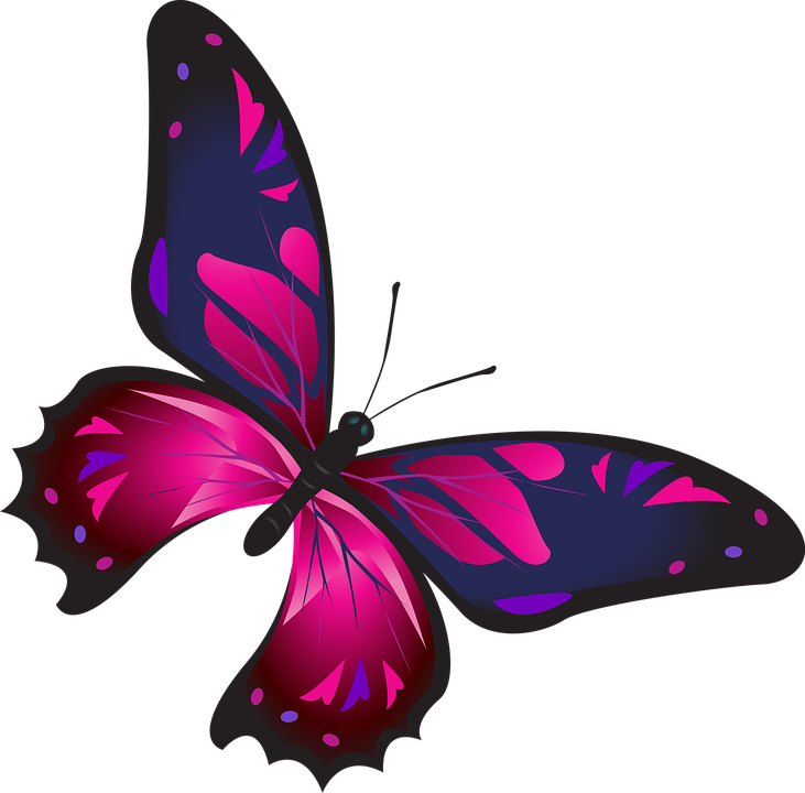 Butterfly Colorful Pink Free Image On Pixabay
