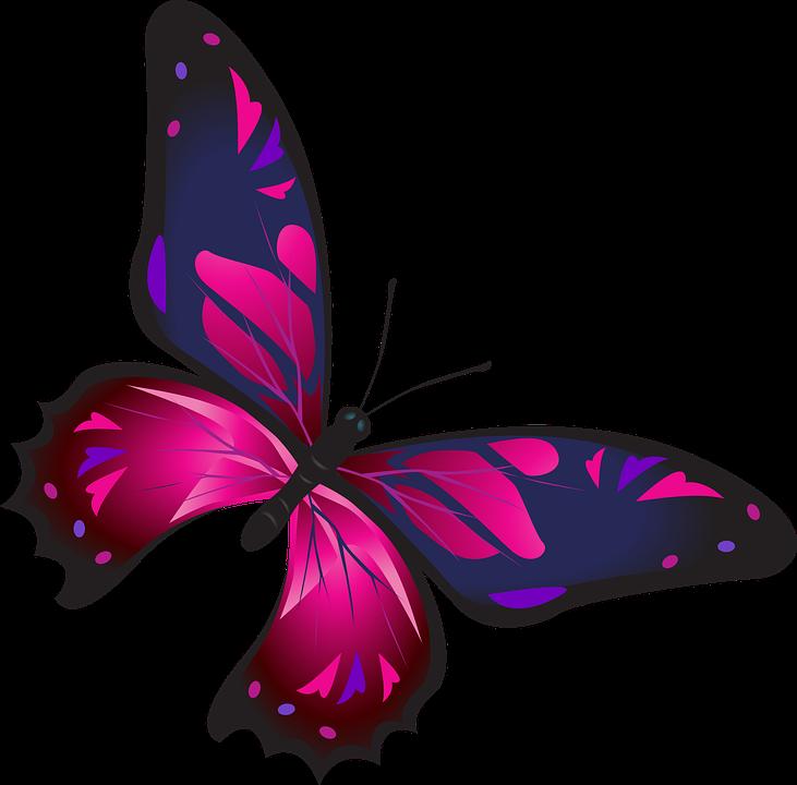 Download 101+ Gambar Kupu Kupu Warna Pink Terbaru Gratis