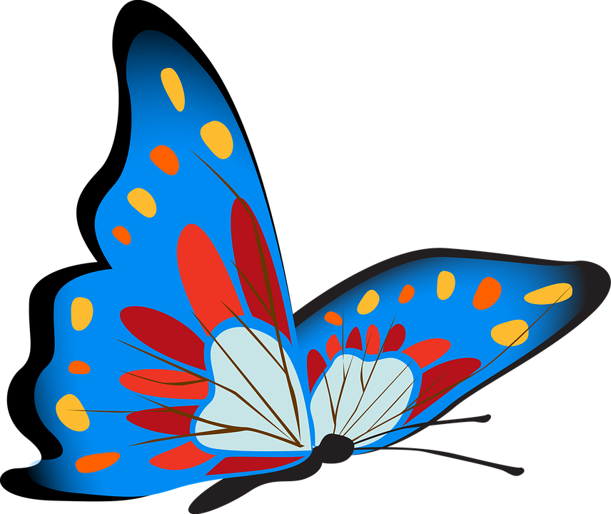 Super Illustration gratuite: Papillon, Coloré, Bleu, Insectes - Image  UT28
