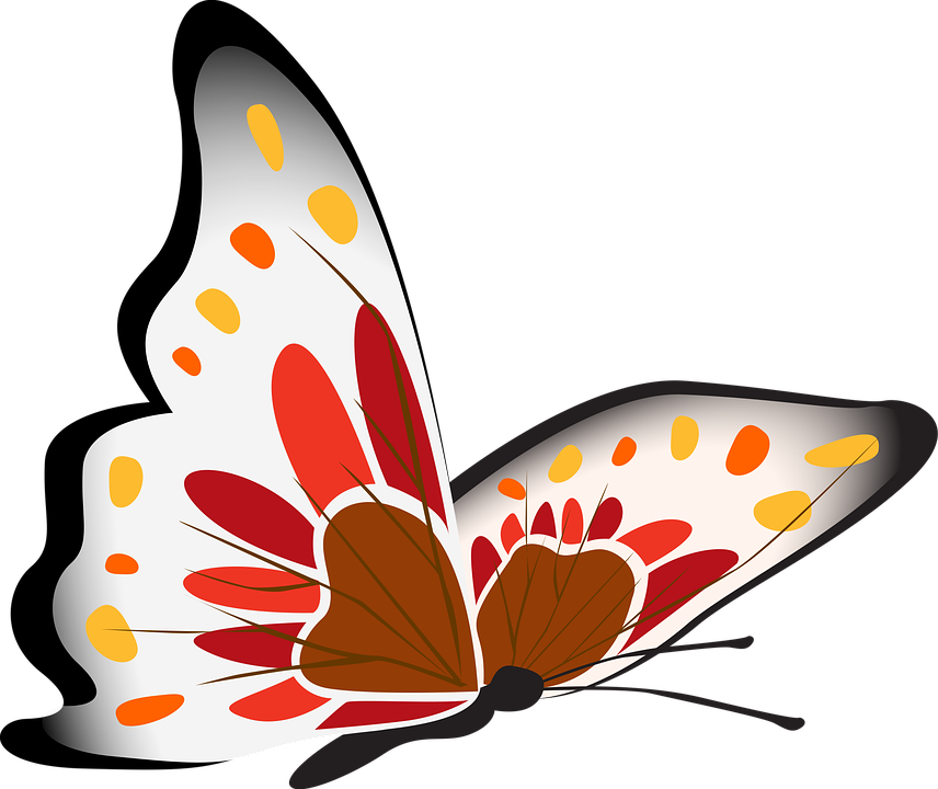 butterfly white red free image on pixabay rh pixabay com clip art free clip art definition