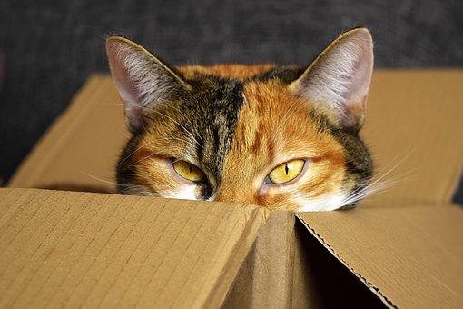 Lucky Cat, Cardboard, Cat, Mieze