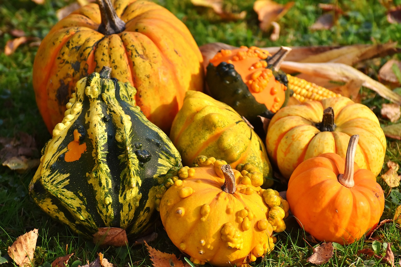 Keith s Farm fresh produce Acushnet MA berries corn Pictures of different colored pumpkins