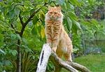 cat, upright