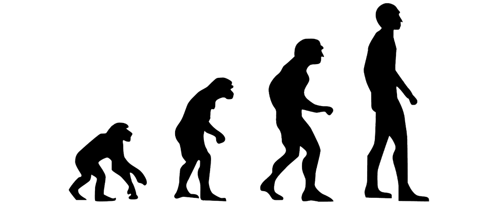 pdf The Evolution