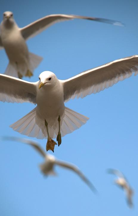 Birds Flying Nature Free Photo On Pixabay