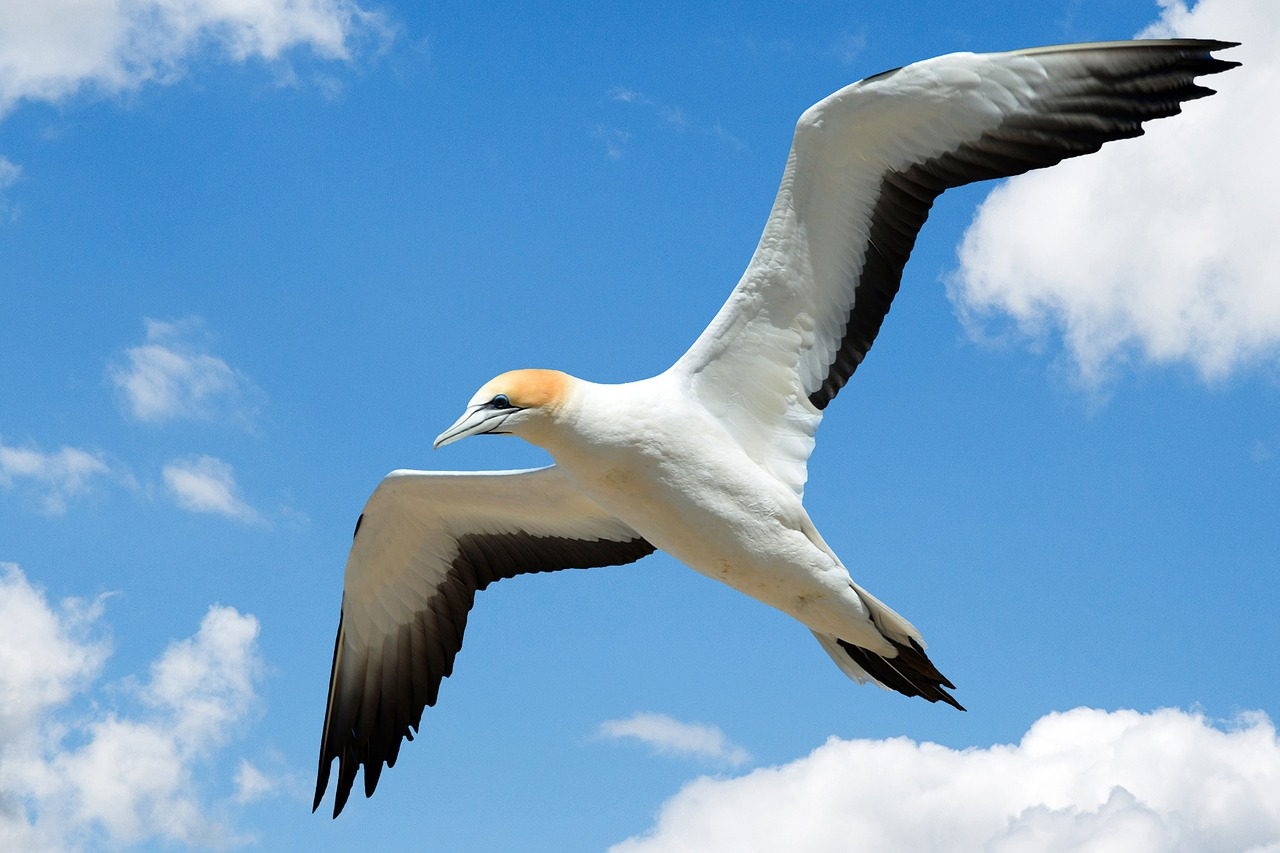 Птица летит картинка
