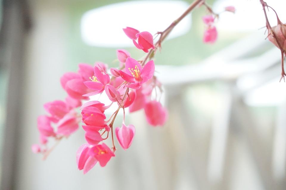 Pink flower free photo on pixabay pink flower nature mightylinksfo Images