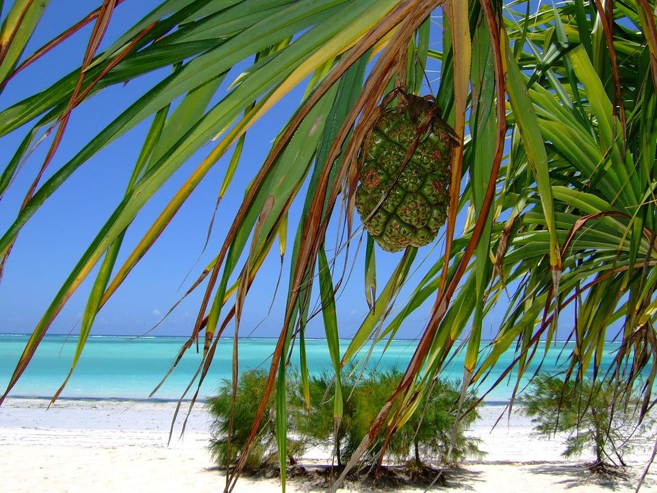 Zanzibar, Plage, Mer, Afrique, Paradise, Jours Fériés
