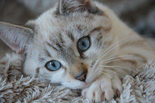 Katze, Kätzchen Liegend, Leiter