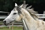 mold, horse