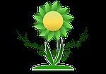 growth, flower, plant