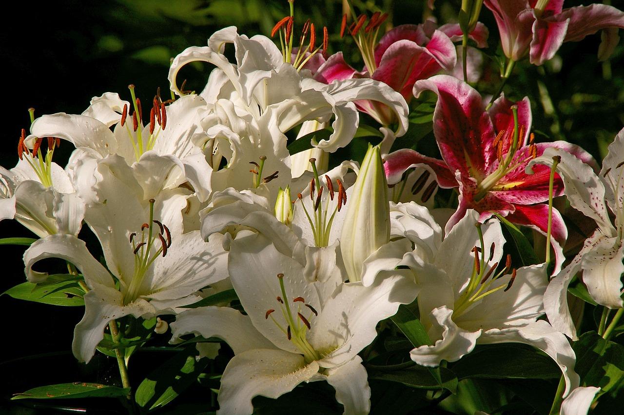 хорошо освещенное смотреть фото цветов лилии данном гастрономическом