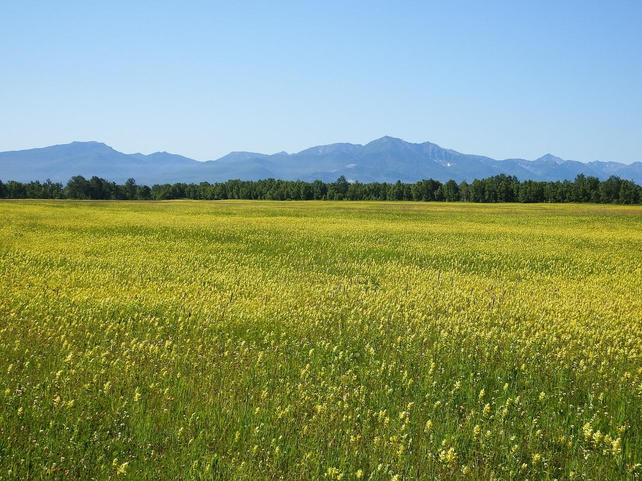 просто картинка луговое поле отметить