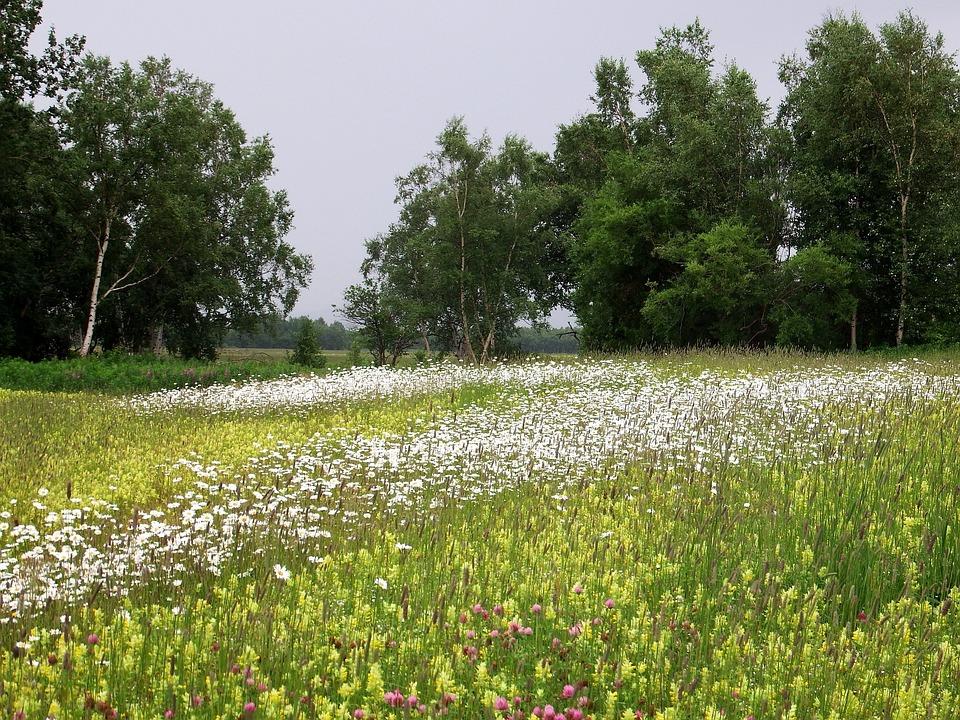 Meadow – Pixabay – Natalia_Kollegova