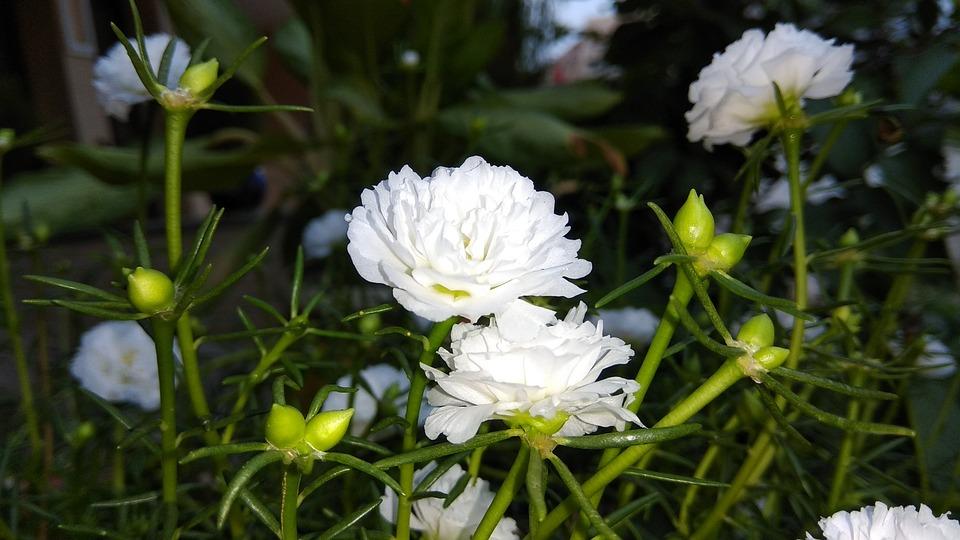 Weiß Blume Mit Kalee · Kostenloses Foto auf Pixabay