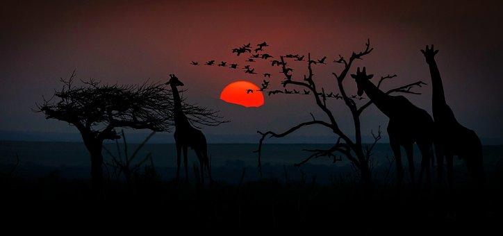 África, Jirafas, Mundo Animal, Desierto