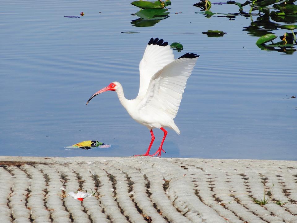 Bird White Crane - Free photo on Pixabay