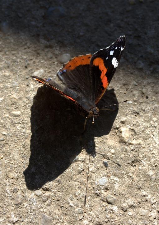 Kelebek Siyah Kırmızı Pixabayde ücretsiz Fotoğraf