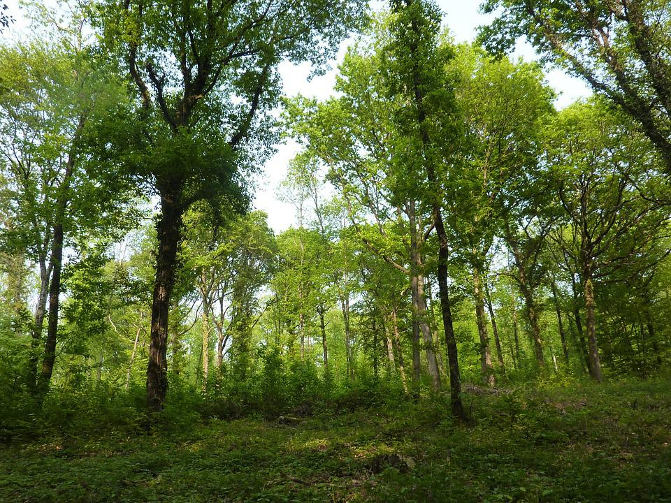 Fotos de paisajes boscosos 69