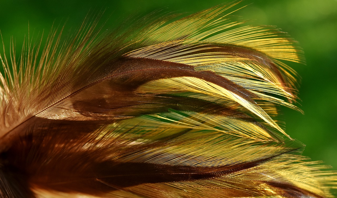 Красивое перо птицы картинка