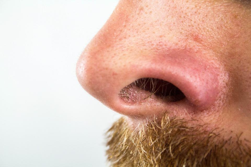 Free photo nose nostrils nose hairs free image on pixabay nose nostrils nose hairs blackheads bart urmus Image collections