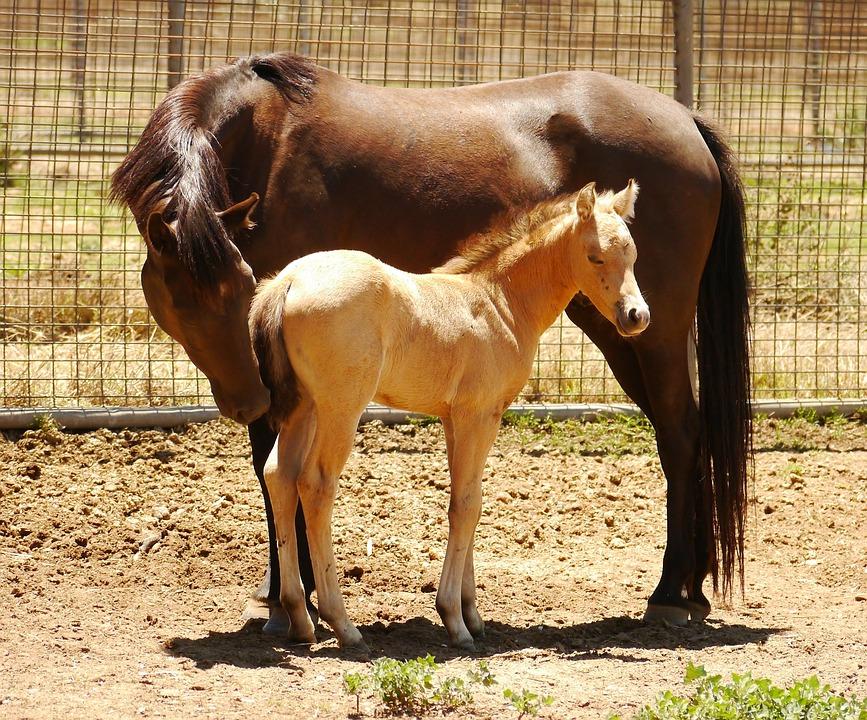 Foal Kuda Australia Foto Gratis Di Pixabay