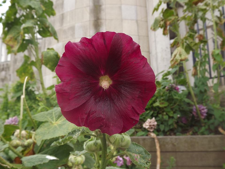 85 Gambar Tumbuhan Bunga Terlihat Keren
