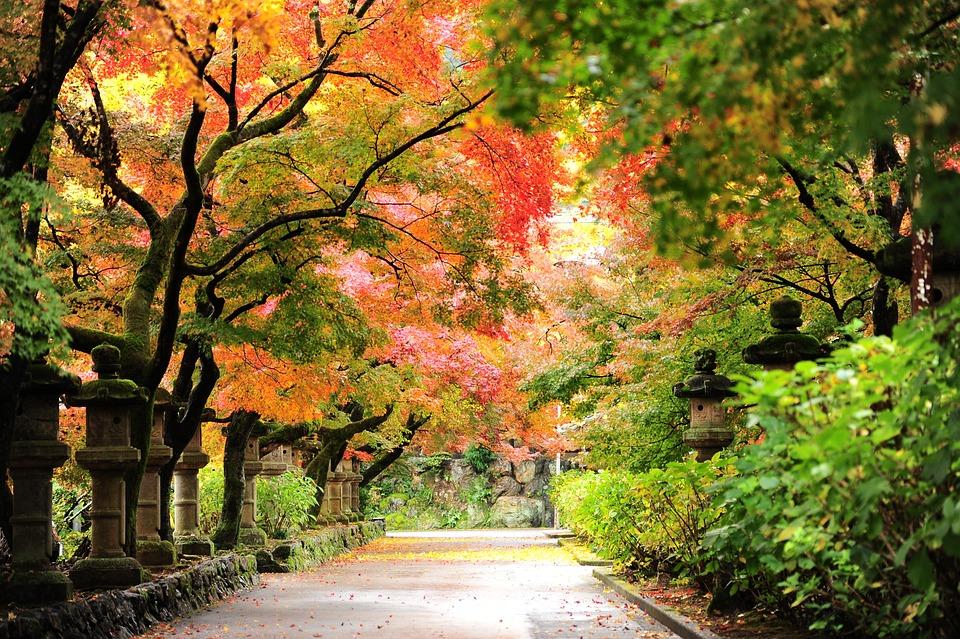 oto o hojas oto ales foto gratis en pixabay On imagenes otonales