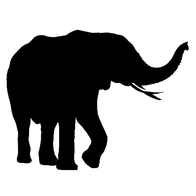 African Elephant Isolated 183 Free Image On Pixabay