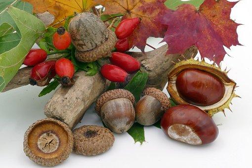 Herbst, Kastanien, Eicheln, Hagebutten