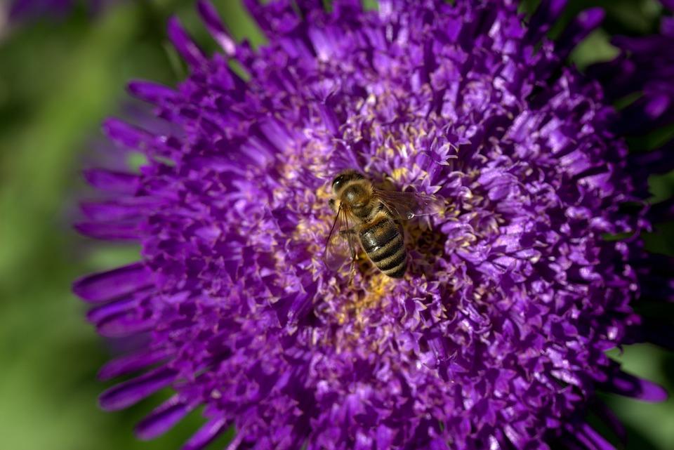 Lebah Bunga Sayap Foto Gratis Di Pixabay