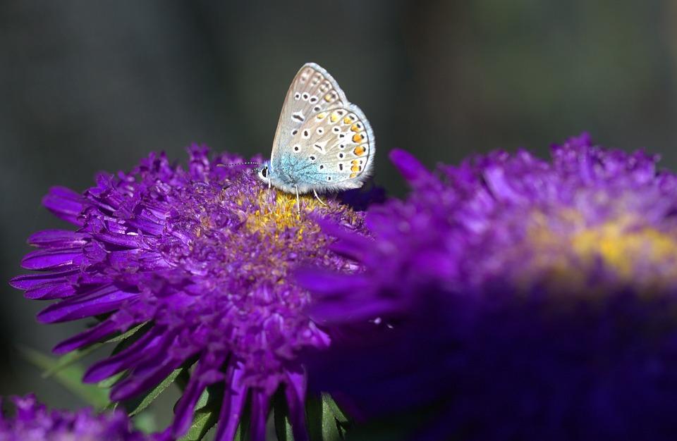 Kupu Biru Bunga Foto Gratis Di Pixabay